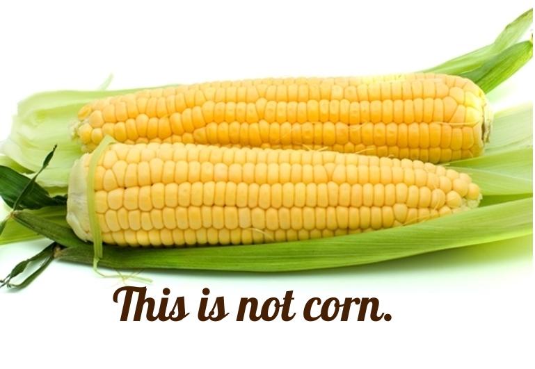 corn and gmos